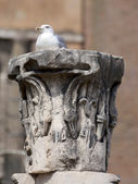 Roman forums, columns, pilasters element with the seagull, Rome, — Stock Photo