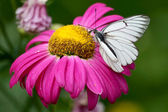 Pink flower with white butterfly — Стоковое фото
