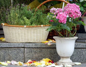 Pink flowers on the granite steps and rose petals — Stock Photo