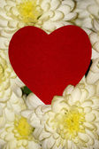 Heart on a background of white flowers — Stock Photo