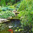Ornamental Pond Surface Aquatic Plants And Goldfish
