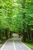 Bike path in the park — Stock Photo