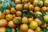Ripe tangerines in foliage — Stock Photo