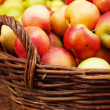 Stock Photo: Ripe apples in the basket