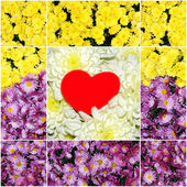 Collage of flowers with a red heart — Stock Photo