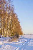 Winter road in a field at sunrise — Stockfoto