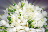 Hermoso ramo de flores blancas. — Foto de Stock