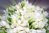 Vacker bukett med vita blommor. — Stockfoto