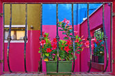 Red flowers on the windowsill, the island of Burano, Venice, Ita — Stock Photo