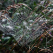 Stock Photo: Spider web.