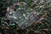Spider web. — Stock Photo