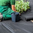 Stockfoto: Weed Barrier Sheet