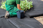 Weed Barrier Sheet — Foto Stock