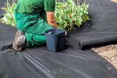 雑草の障壁シート — ストック写真