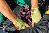 バリア マットと植栽 — ストック写真