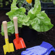 Stock Photo: Equipment for gardening