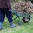 Cleaning up garden using wheelbarrow — Photo #27065461