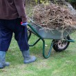 Stock Photo: Cleaning up garden using wheelbarrow