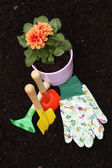 Dahlia and gardening tools — Stock Photo