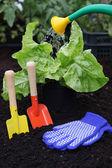 Equipment for gardening — Stock Photo