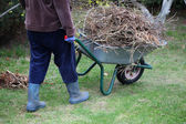 Cleaning up garden using wheelbarrow — Stock Photo