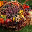 Autumn in basket — Stock Photo
