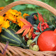 Pumpkins, flowers — Stock Photo