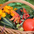 Pumpkins, flowers — Stock Photo #27924493