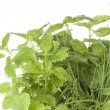 Herbs — Stock Photo #29167593
