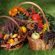 Stock Photo: Autumn in garden