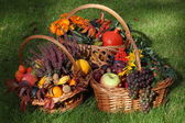 Autumn in garden — Stock Photo