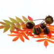 Chestnuts and leaves — Stock Photo
