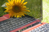 Notebook and a flower — Stockfoto