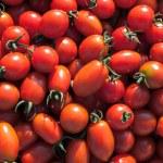 Tomato pile — Stock Photo