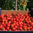 Carton box full of tomatoes — Stockfoto