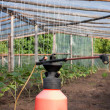 Greenhouse in summer — Stock Photo