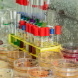 Stock Photo: Agar plates and test tubes