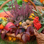 Autumn decorations — Stock Photo
