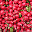 Radish multiplication — Stock Photo