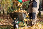 Wheelbarrow full of leaves — Stock Photo