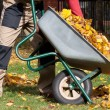 Autumn cleanning in the garden — Stock Photo