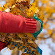 Hands holding the leaves — Stock Photo