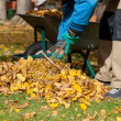 Man raking the leaves — Stock Photo