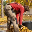 Man filling the bucket with leaves — Stock Photo