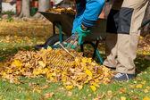 Man raking the leaves — Stock Photo