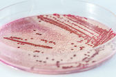 Microbiology — Stock Photo