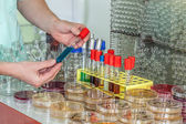 Chemist hand with test tube — Stock Photo
