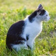 Black and white cat — Stock Photo #35310569