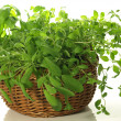 Bunch of herbs — Stock Photo