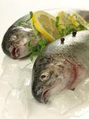 Frozen trout, closeup — Stock Photo
